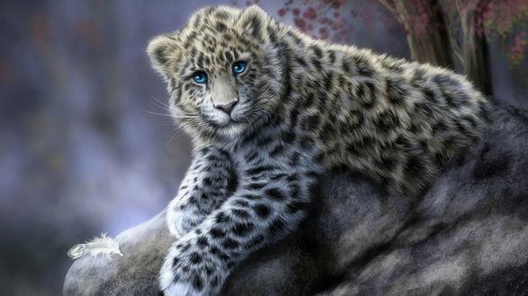 Обои Красивый леопард лежит на камне