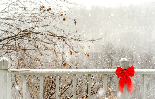 Обои Красный бантик, повязан на запорошенном снегом деревянном заборе, на фоне деревьев с желтыми листьями