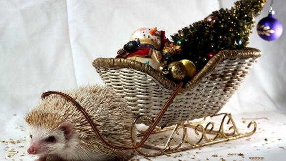 Обои Ежик несет плетенные сани с елочными украшениями
