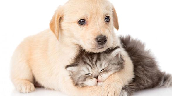 Обои Щенок обнимает пушистого котенка
