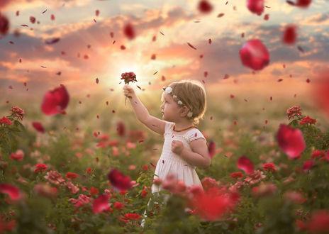 Обои Девочка стоит среди роз, смотрит на розочку, которую приподняла к верху. Сверху падают лепестки роз