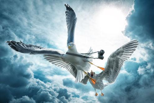 Обои Две чайки парят в небе среди облаков, одна пытается нагнать другую, у которой есть фотоаппарат