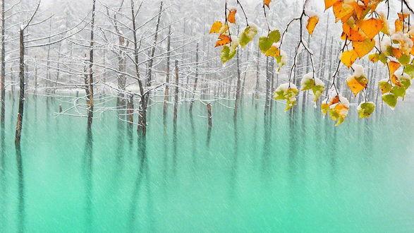 Обои Деревья покрытые снегом, отражаются в бирюзовой воде, на переднем плане, ветка дерева с желтыми листья покрытые снегом