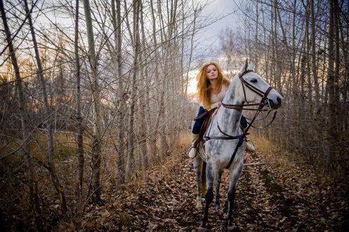 Обои Красивая девушка, сидит верхом на белой лошади на фоне лесного пейзажа