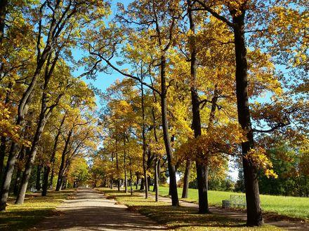 Обои Аллея парка вдоль которой растут деревья и стоят скамейки. Осенний Пушкин, Санкт-Петербург