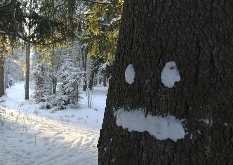 Обои В лесу деревья и земля покрыты снегом, на стволе дерева снежки образуют глаза и рот человека