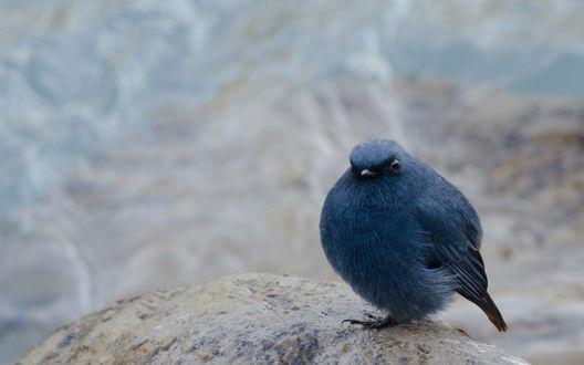 Обои Забавная пухленькая птичка сидит на камушке на размытом фоне