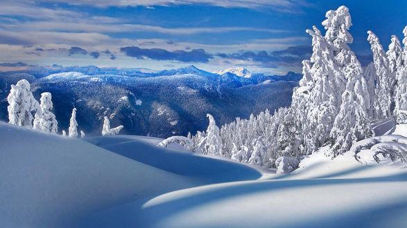 Обои Заснеженные деревья на снежных холмах