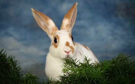 Обои Кролик сидит возле зеленых веточек на фоне неба