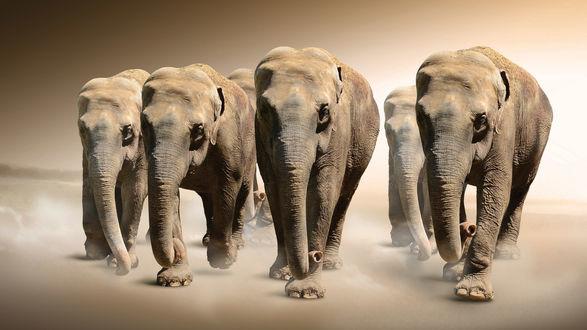 Обои Стадо слонов в пустыне
