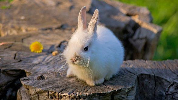 Обои Милый белый кролик сидит на пеньке
