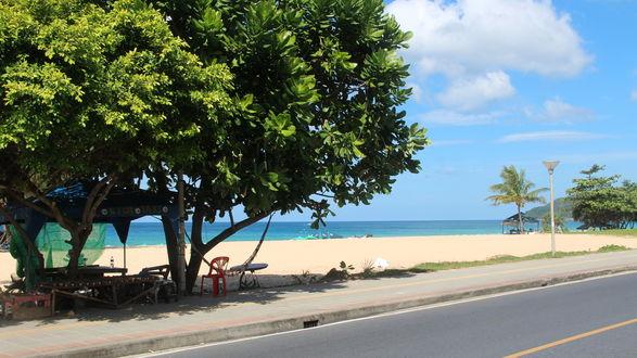 Обои Большие деревья у дороги и моря