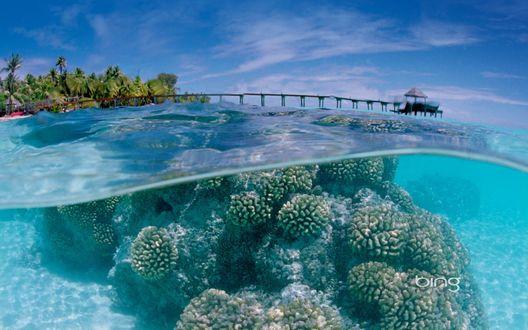 Обои Подводный мир тропиков