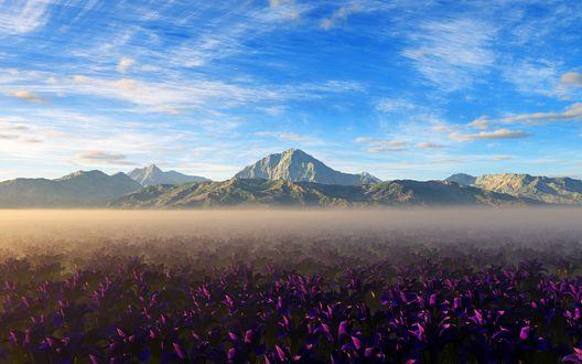 Обои Фиолетовые цветы растущие у гор покрытых белой дымкой