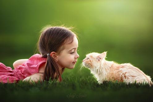 Обои Девочка с котенком лежат на траве, ву Suzy Mead