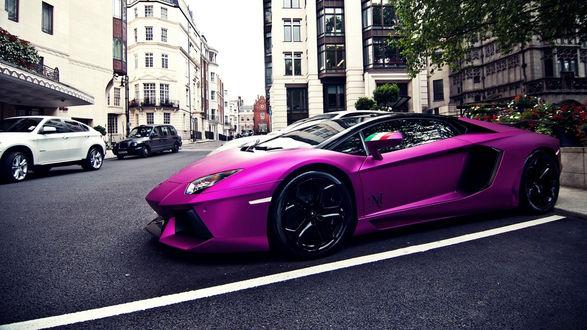 Обои Фиолетовая Ламборджини / Lamborghini на дороге