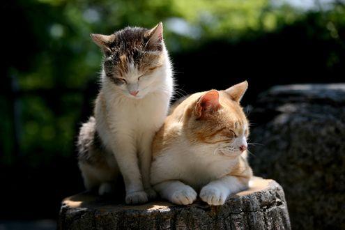 Обои Две кошки греются на пне в лучах солнца летним днем