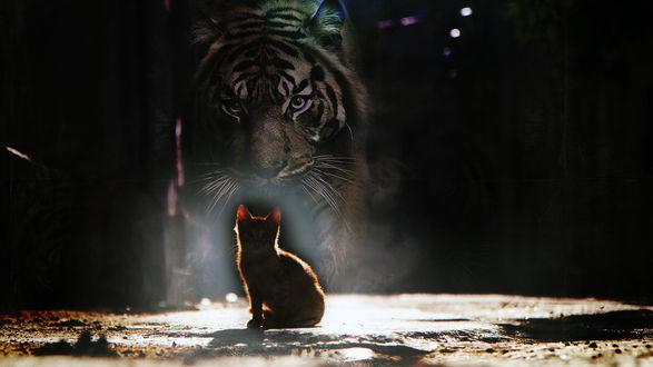 Обои Рыжий кот в лучах света смотрит на фантастический силуэт тигра на темном фоне