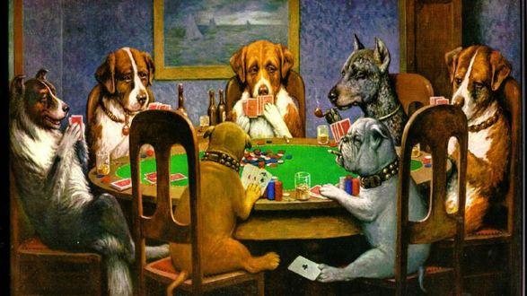 Обои Собаки играют в покер