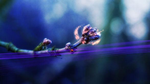 Обои Маленькая божья коровка, сидит на веточке с нераспустившимися цветочками, над веточкой свечение и сиреневые линии света пронизывают пространство