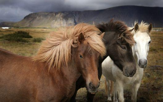 Обои Три лошади на фоне гор