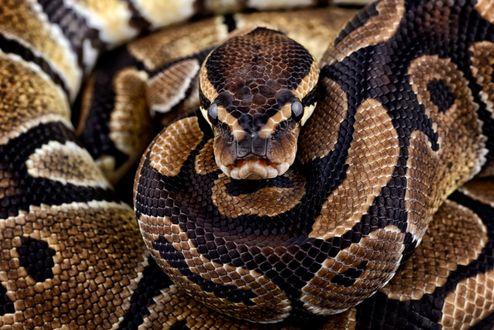 Обои Змей, ву Mark Johnson