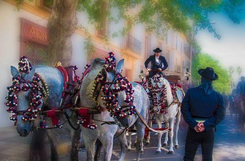 Обои Мексиканская праздничная упряжка лошадей с каретой на улице города