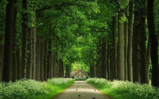 Обои Дом в конце аллеи, по обеим сторонам которой растут деревья, на аллее сидят птицы
