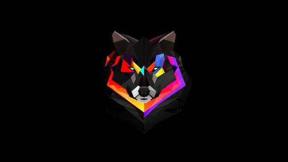 Обои Яркий разноцветный рисунок волк на черном фоне