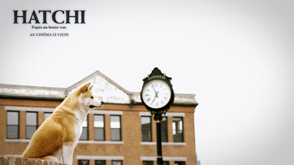 Обои Собака Хатико ждет своего хозяина на вокзале, фильм Хатико: Самый верный друг