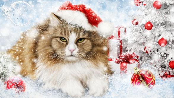 Обои Новогодний кот у наряженной елки