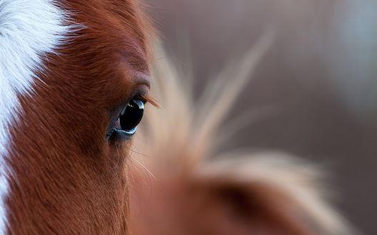 Обои Глазки милой лошади крупным планом