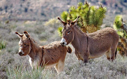Обои Забавные ослики на фоне природы