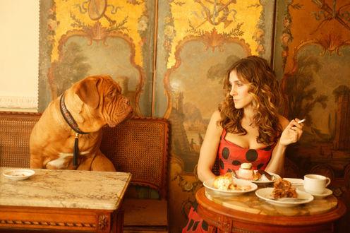 Обои Актриса Сара Джессика Паркер / Sarah Jessica Parker, сидит за накрытым столиком в ресторане и смотрит на пса породы бордоский дог сидящего на диване напротив