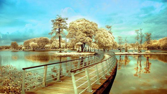 Обои Мост к острову на озере в парке