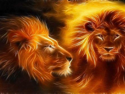 Обои Два огненных льва на темном фоне