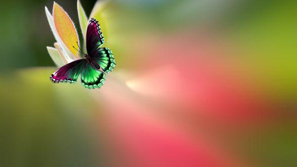 Обои Пестрая бабочка на размытом фоне