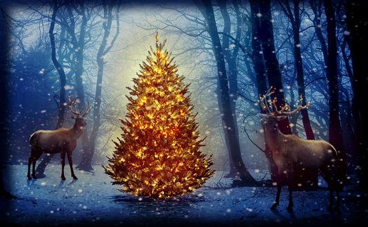 Обои Нарядная елка стоит в зимнем лесу, рядом два оленя
