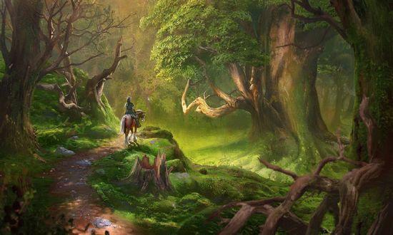 Обои Наездник на лошади в лесу