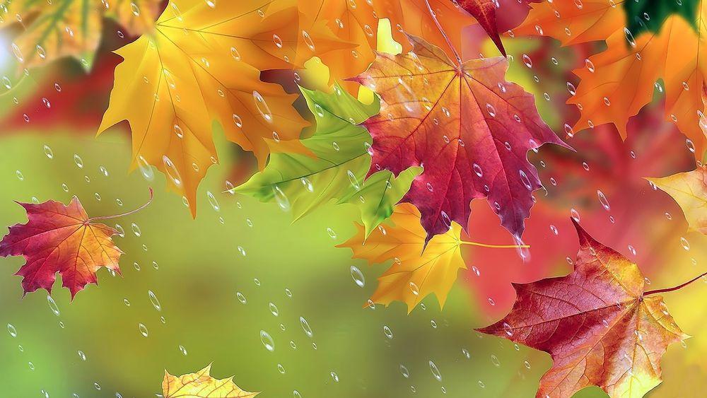 Фото дождь осень листья