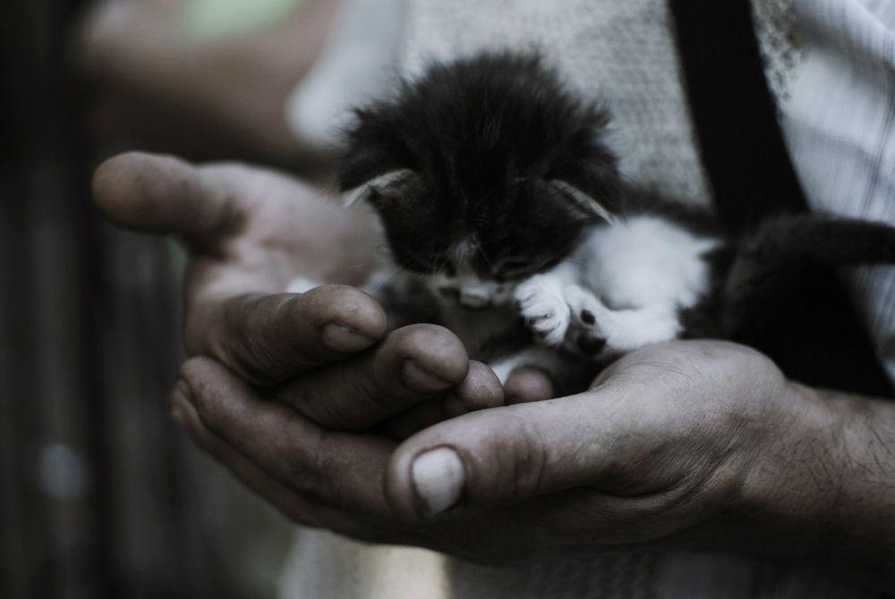 Держать больного котенка на руках во сне
