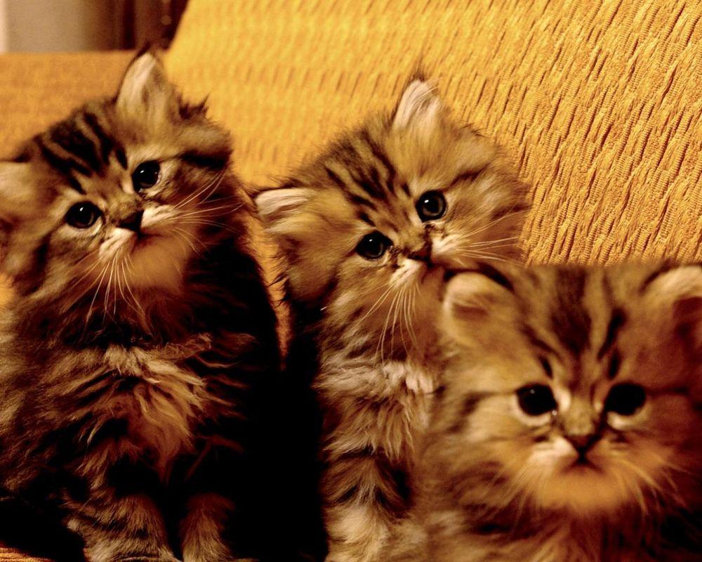 фотографии трех котят вернулась, буквально умирала