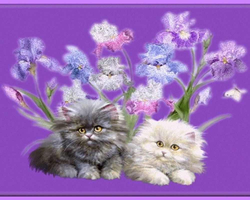 Открытки кошками анимация