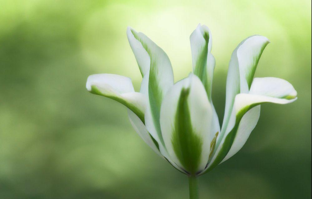 картинки серо-зеленых цветов пришли