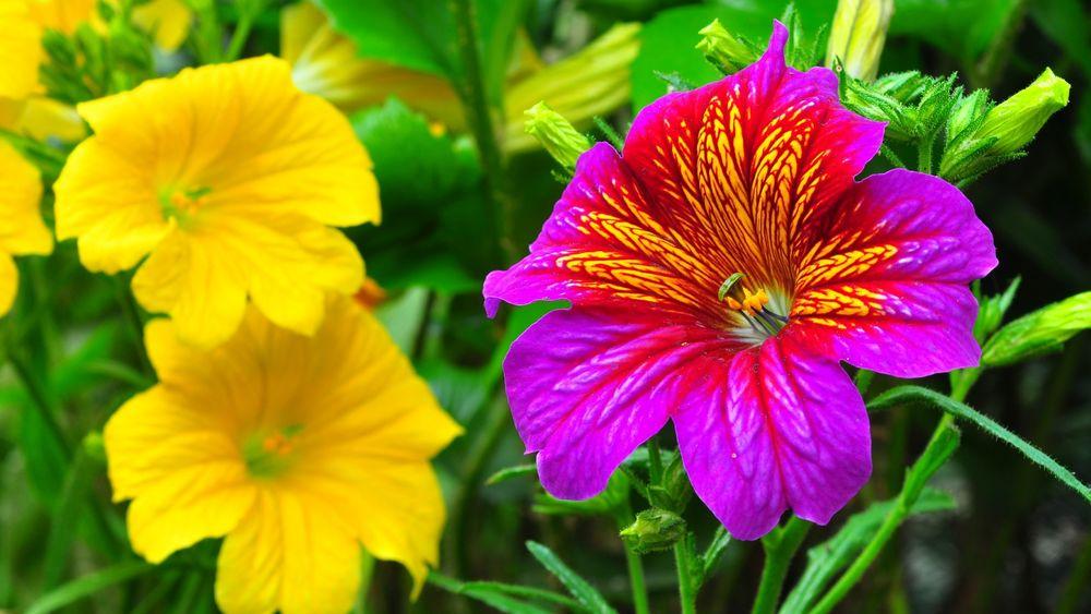 Самые красивые яркие цветы фото