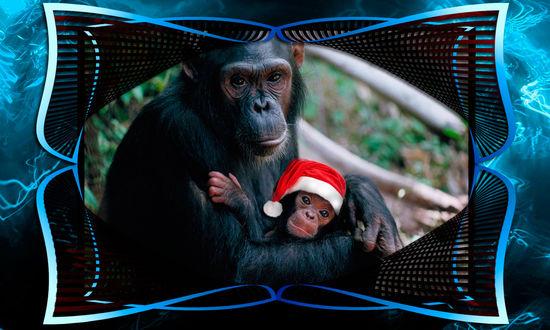 Обои Мама обезъяна держит малыша в новогодней шапочке