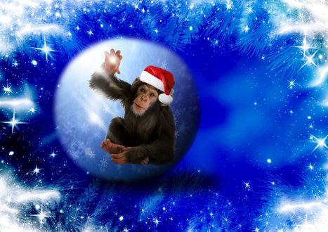 Обои Обезьянка в новогодней шапке сидит в шарике на морозном фоне