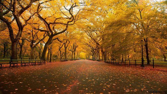 Обои Пустые аллеи осеннего парка