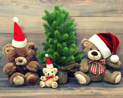Обои Игрушечные медведи в новогодних колпаках сидят возле ели