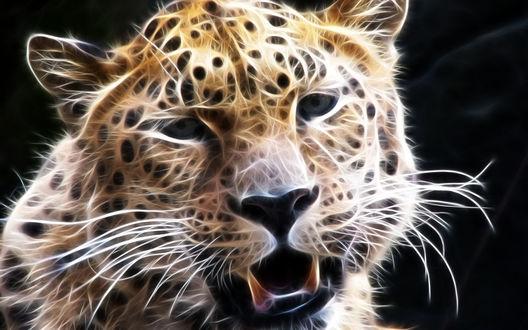 Обои Морда леопарда в открытой пастью